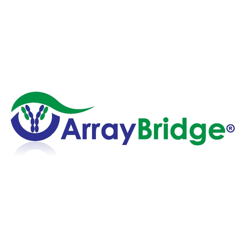 logo-array-bridge